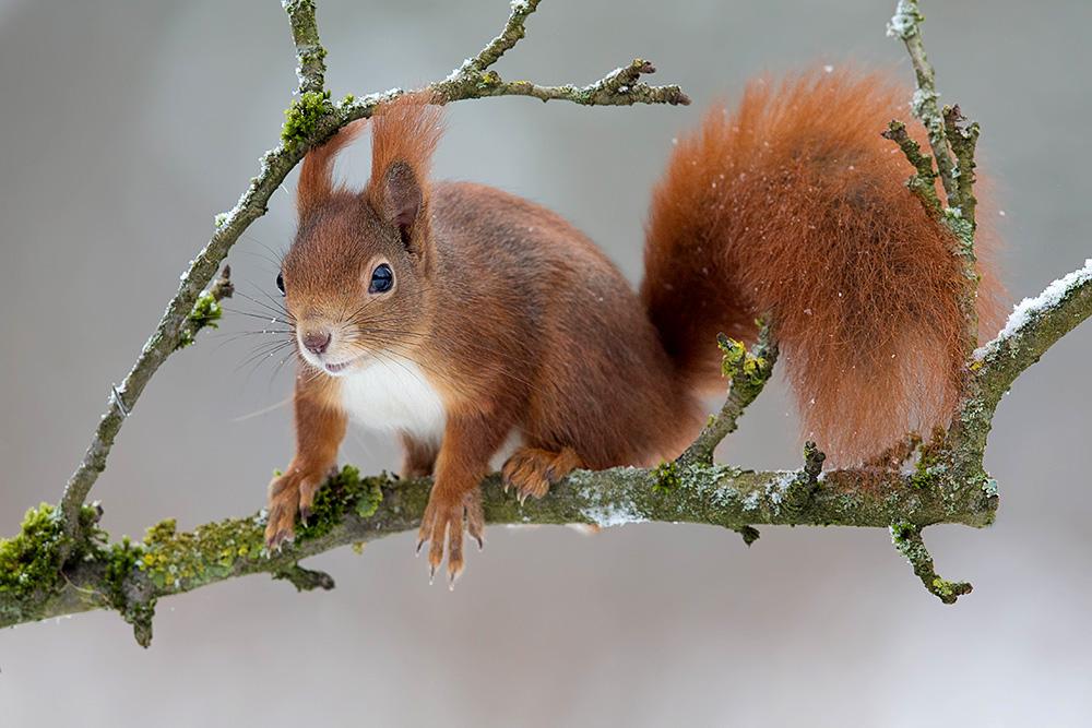 Eichhörnchen-8876