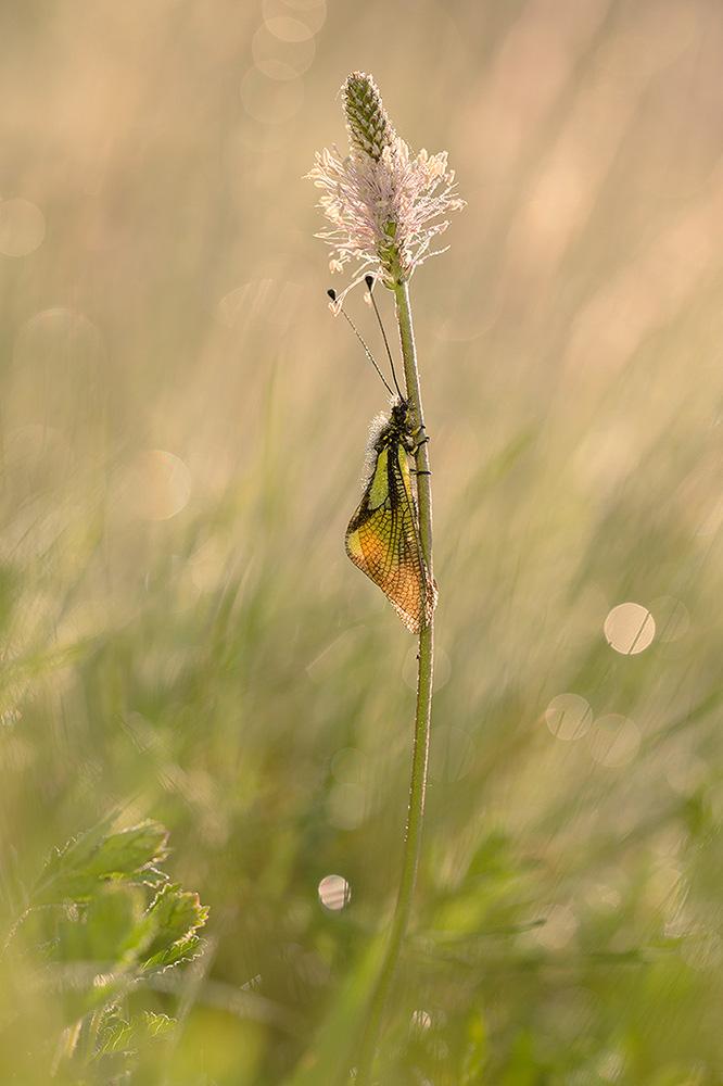 Schmetterlingshaft-6